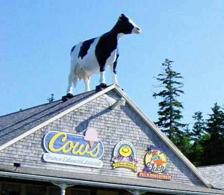 Be careful what you step in at COWS ice cream on PEI.