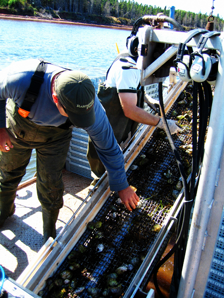 James Power harvesting oysters in New London Bay. Photo by David Lansing.