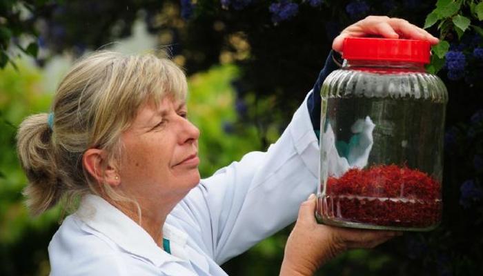 how to grow saffron in tasmania