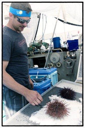 Sea urchins, Steveston Fisherman's Wharf