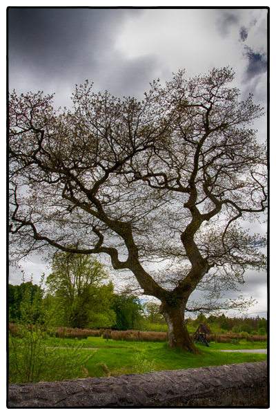 A fairy tree in Ireland